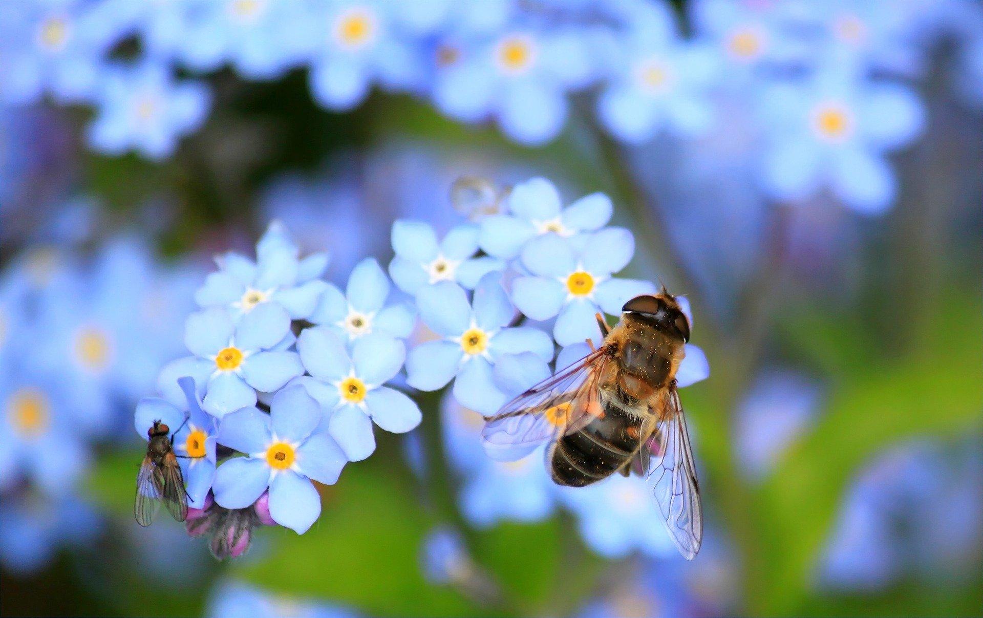 蜂がいなくなったら、人は4年以上生きられない。